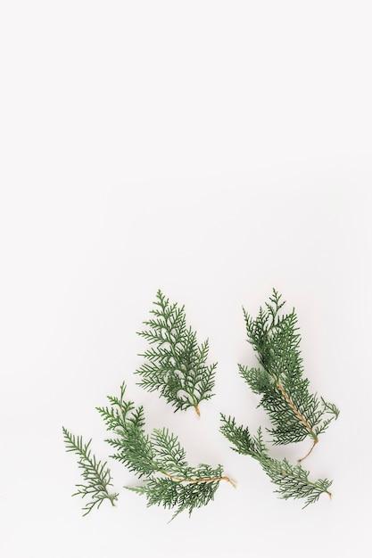 Grüne konifereniederlassungen auf hellem schreibtisch Kostenlose Fotos