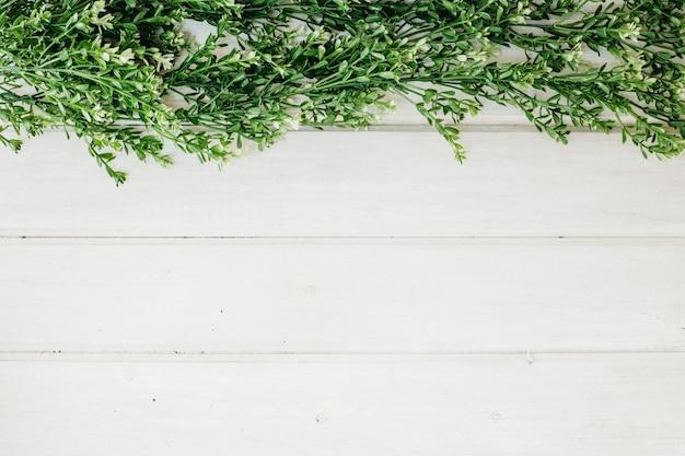 Grüne kräuter und platz auf der unterseite Kostenlose Fotos