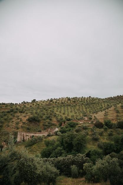 Grüne landschaft mit vielen grünen bäumen und bergen unter den gewitterwolken Kostenlose Fotos