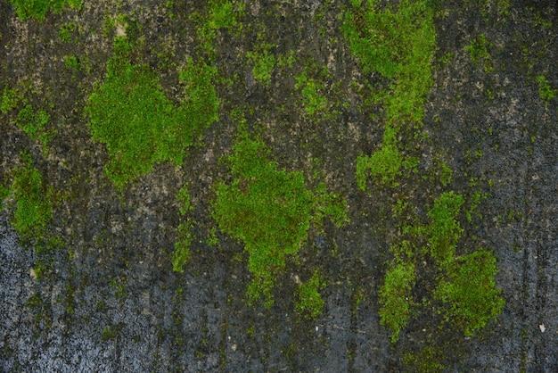 Grüne moosbeschaffenheit Premium Fotos