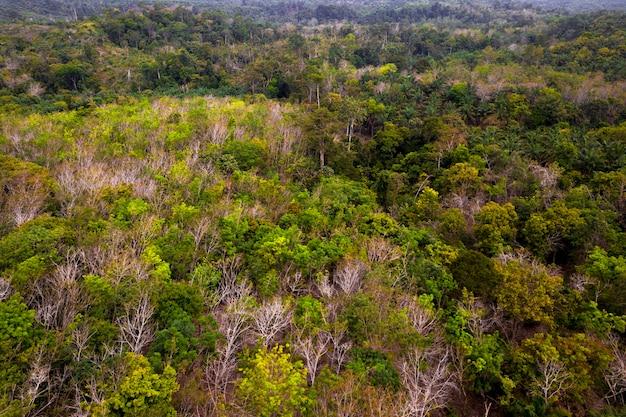Grüne naturlandschaft im grünen und frischen indonesischen sumatra-wald Premium Fotos