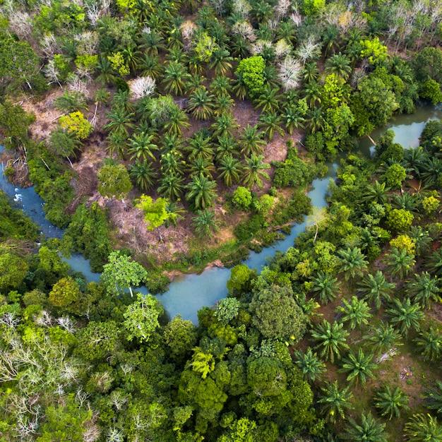Grüne naturlandschaft in den grünen wäldern von sumatra indonesien und frisch aus der luft Premium Fotos