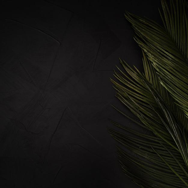 Grüne palmblätter auf schwarzem strukturiertem hintergrund mit kopienraum. Kostenlose Fotos