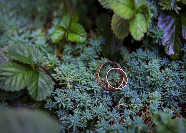Grüne pflanze und trauringe Premium Fotos
