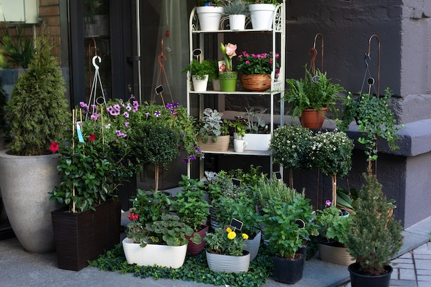 Grüne pflanzen in töpfen auf dem tisch im straßenblumenladen. kaufen sie zimmerpflanzen und topfblumen. Premium Fotos