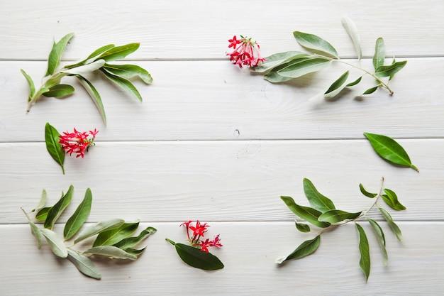 gr ne pflanzen mit roten bl ten download der kostenlosen fotos