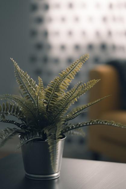 Grüne schöne pflanze in einem metalltopf drinnen Kostenlose Fotos