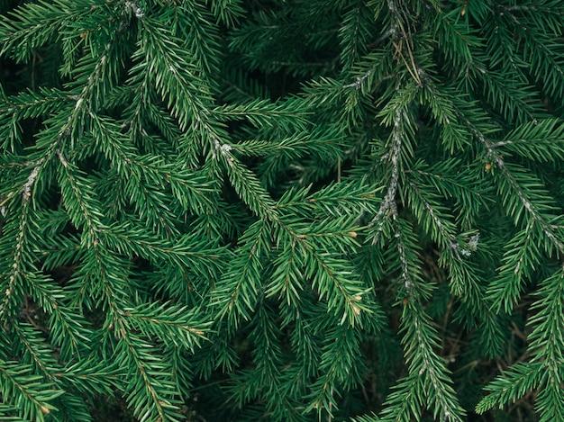 Grüne tannenbaumbeschaffenheit / blattbeschaffenheitshintergrund / kopienraum Premium Fotos