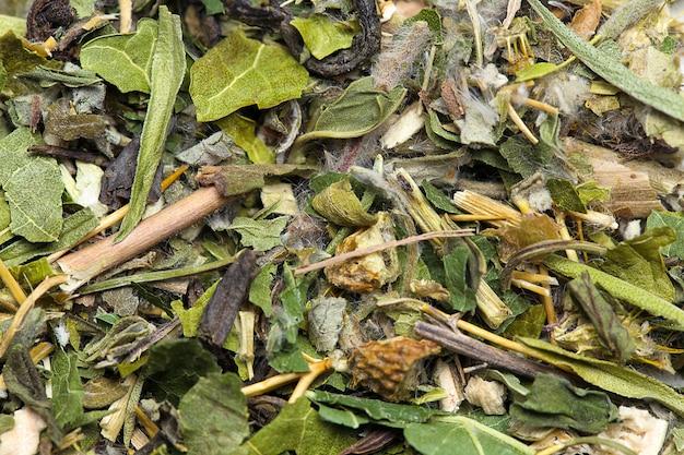 Grüne teeblätter schließen hintergrundbeschaffenheit Premium Fotos