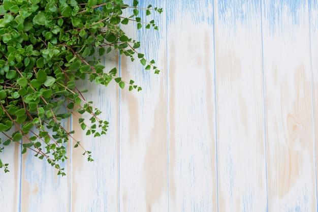 Grüne topfpflanze im topf auf holztischhintergrund Premium Fotos
