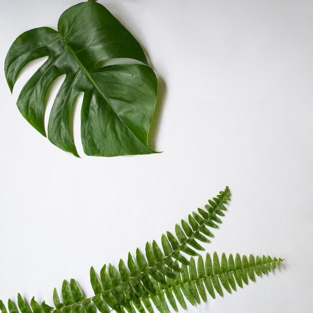 Grüne tropische blätter auf weißem hintergrund. Premium Fotos