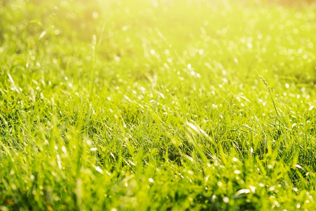 Grüne üppige wilde wiese im wald Kostenlose Fotos