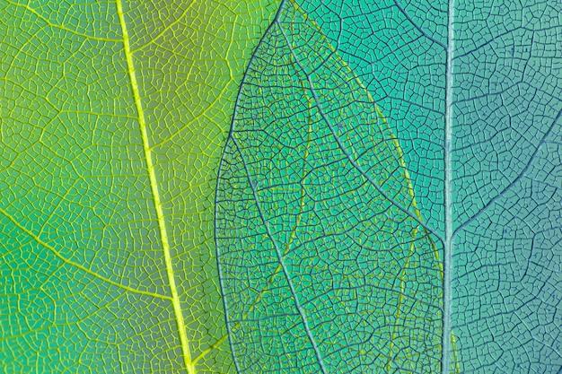Grüne und blaue transparente blätter Premium Fotos