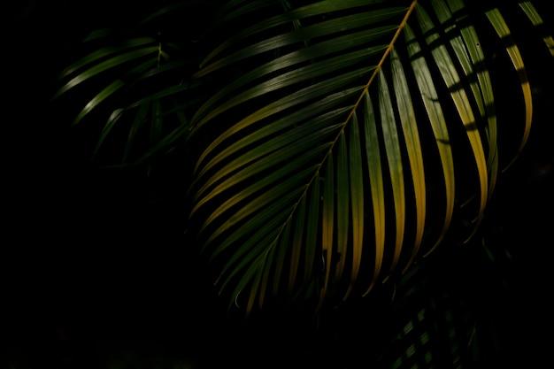 Grüne und gelbe palmblätter im wald Premium Fotos