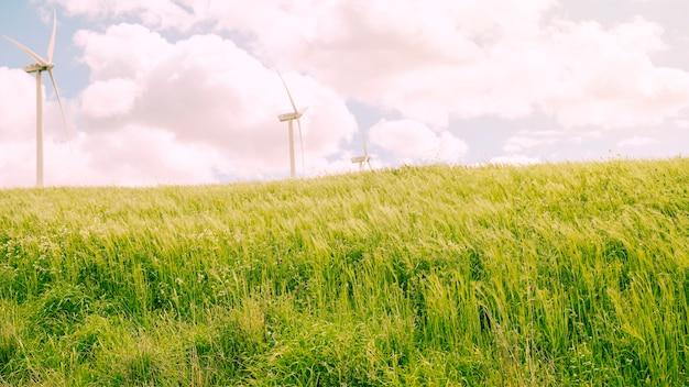 Grüne wiese mit bewölktem himmel Kostenlose Fotos
