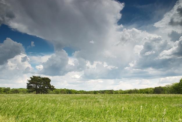 Grüne wiese und blauer himmel mit einsamem baum und wald Premium Fotos
