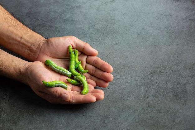 Grüne würmer in den händen des menschen Kostenlose Fotos