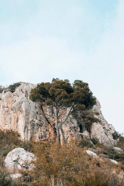 Grüner baum vor felsigem berg gegen blauen himmel Kostenlose Fotos