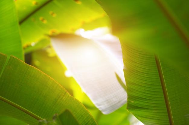 Grüner blatthintergrund im wald. Kostenlose Fotos