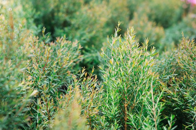 Grüner blatthintergrund. Kostenlose Fotos