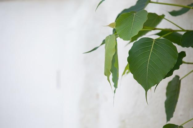 Grüner blattmusterhintergrund und -design. Kostenlose Fotos