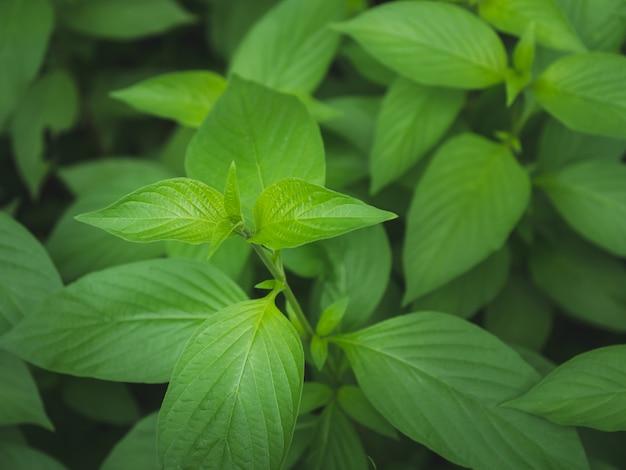 Grüner hintergrund des grünen blattdetails der nahaufnahme Premium Fotos