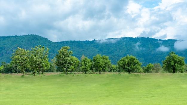 Grüner hinterhof mit berg und blauem himmel Premium Fotos