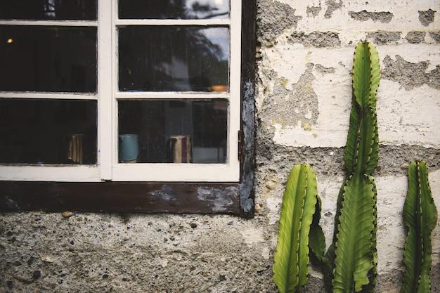 Grüner kaktus gewachsen vor einer alten betonmauer nahe den alten fenstern Kostenlose Fotos