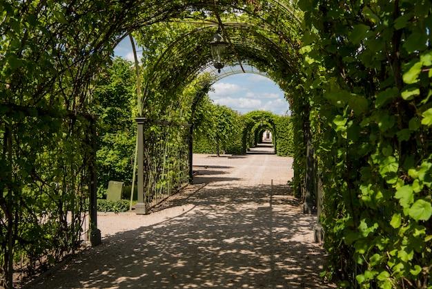 Grüner park am sonnigen sommertag. Premium Fotos