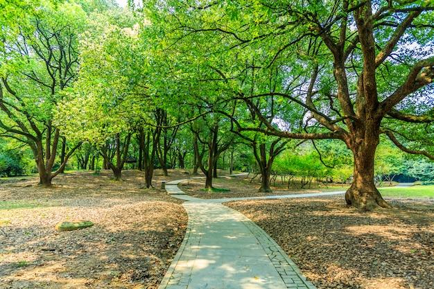 Grüner park Kostenlose Fotos