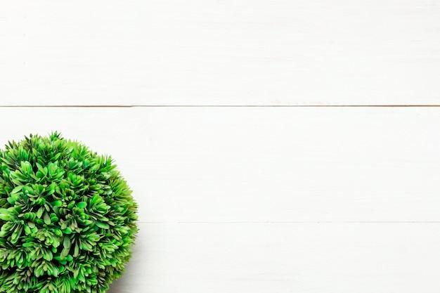 Grüner runder busch auf weißem hintergrund Kostenlose Fotos