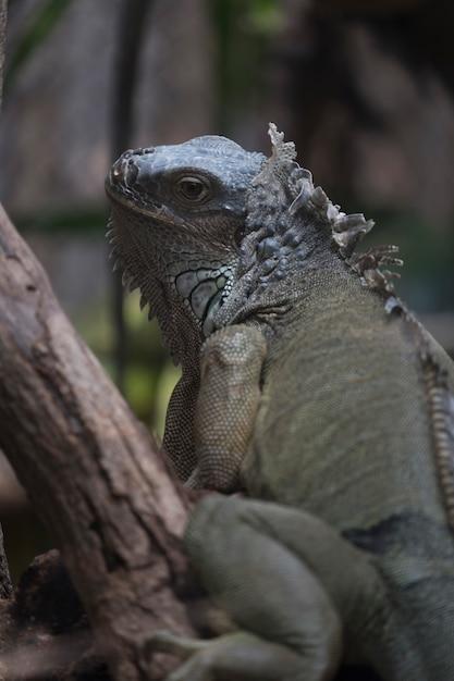 Grüner salamander Kostenlose Fotos