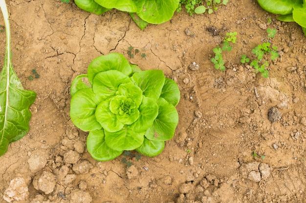 Grüner salat Kostenlose Fotos