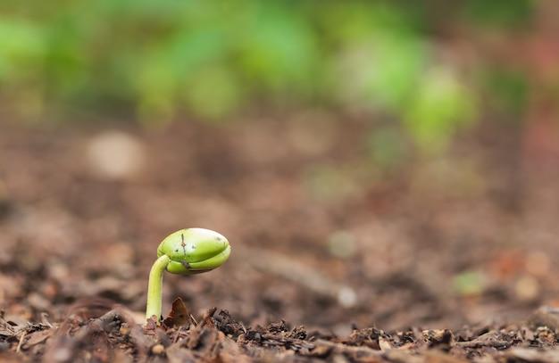 Grüner spross, der aus dem boden herauswächst. Premium Fotos