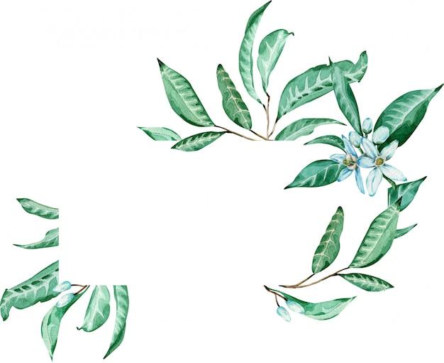 Grüner tropischer rahmen. mandarinenblume und blattschablone. aquarell abbildung. Premium Fotos