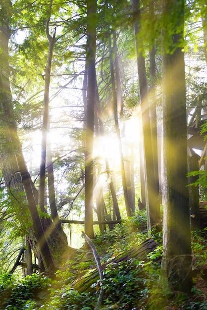 Grüner wald bei sonnenaufgang Premium Fotos