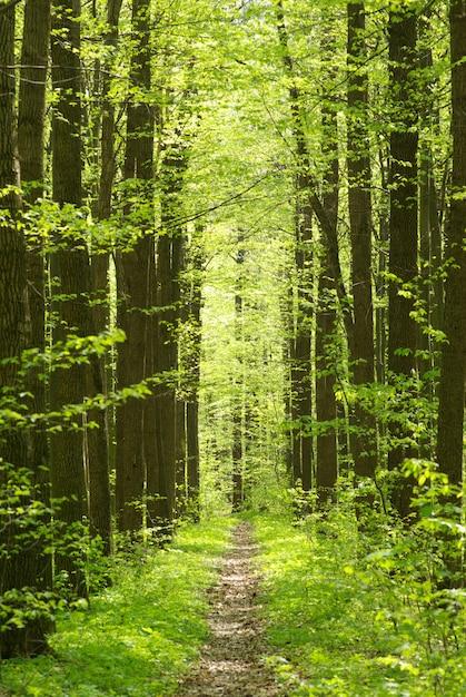Grüner wald, weg Premium Fotos