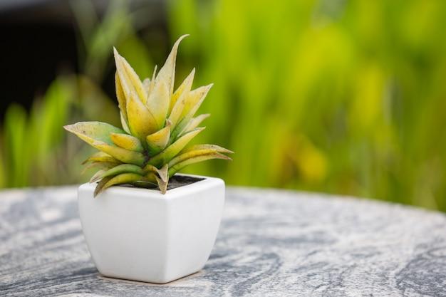 Grünes blatt bokeh mit schönem weichem sonnenlicht Kostenlose Fotos