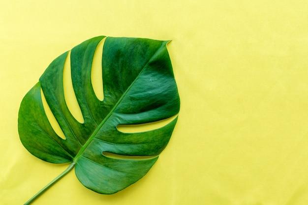 Grünes blatt der monstera-philodendronanlage auf gelbem hintergrund. Premium Fotos