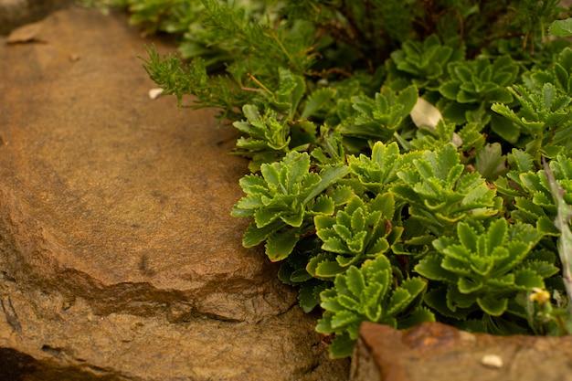 Grünes blatt mit wassertropfen auf schwarzem hintergrund Premium Fotos
