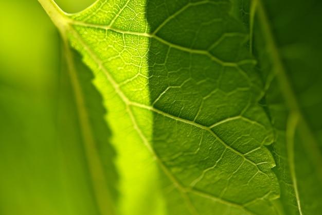 Grünes blatt nahaufnahme Kostenlose Fotos