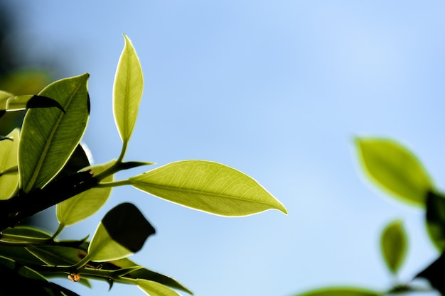 Grünes blatt und zweig im wald Premium Fotos