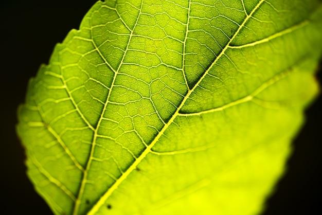 Grünes blatt Kostenlose Fotos