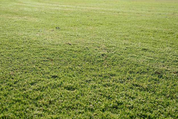 Grünes gras hintergrund Kostenlose Fotos