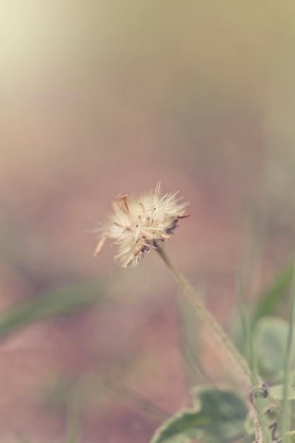 Grünes gras und kleine weiße blumen auf dem feld. schöne sommerlandschaft. Premium Fotos