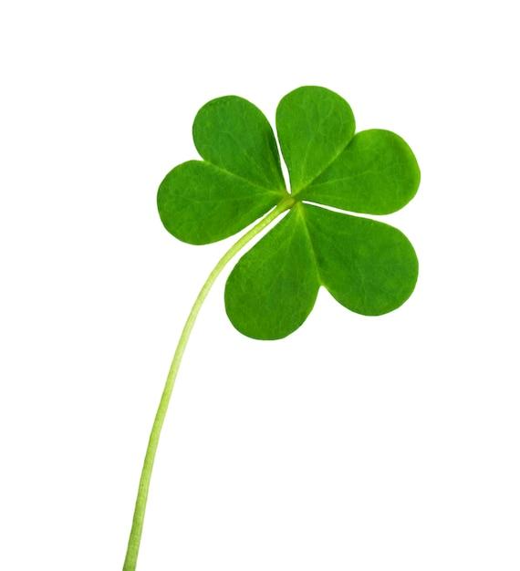 Grünes kleesymbol eines st. patrick tages lokalisiert auf weiß Premium Fotos