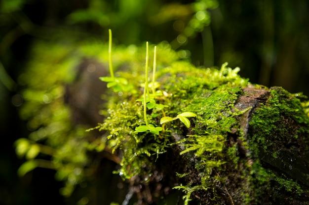Grünes moos, das auf baumast in costa rica wächst Kostenlose Fotos
