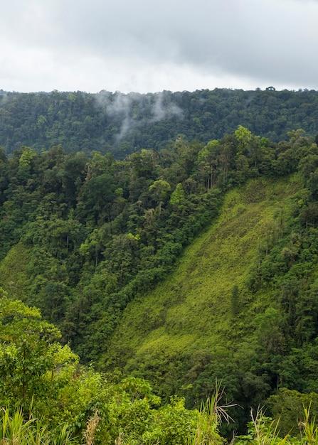 Grünes üppiges tal und berg in costa rica Kostenlose Fotos
