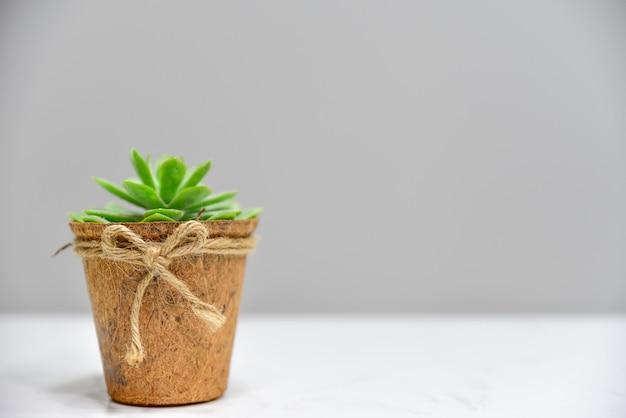 Grünpflanze im hölzernen topf auf dem weißen schreibtisch und dem grauen hintergrund Premium Fotos
