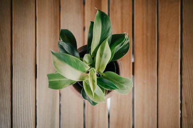 Grünpflanzen in den künstlerischen tongefäßen auf holztisch. Premium Fotos